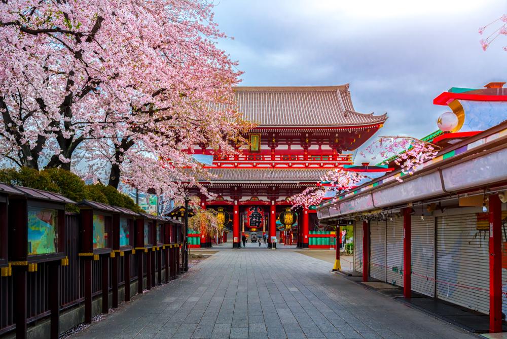 IFIA Japan
