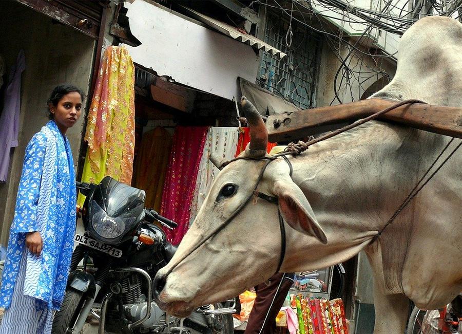 Hindistan Pazar Araştırması