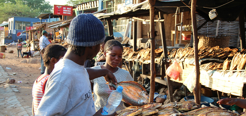 Zambiya Pazar Araştırması